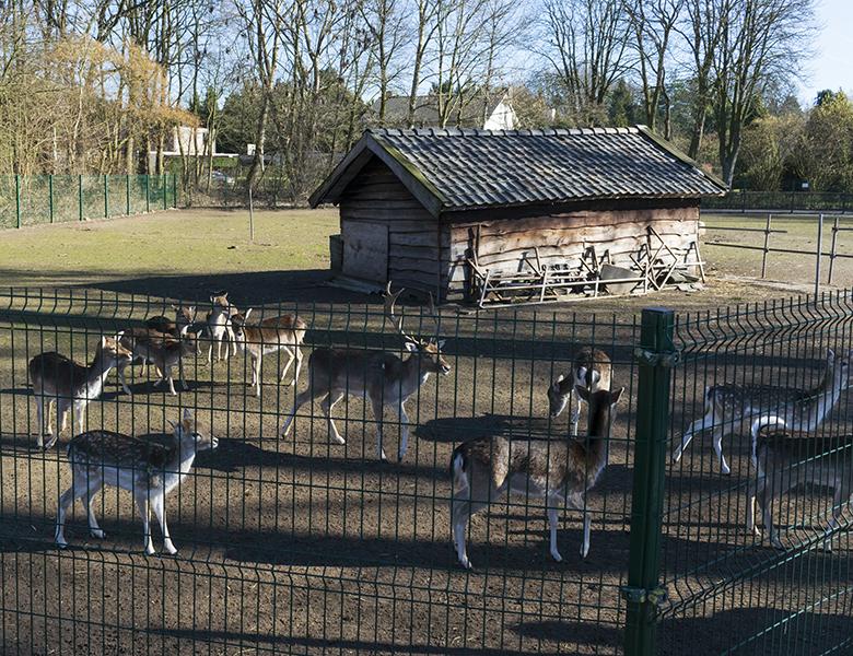 Herten achter hek